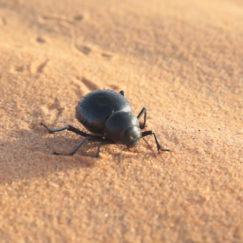 badain jaran chine dune desert maroc olivier coste sisyphe explorer solar explorer mongolie trekking survie (3)