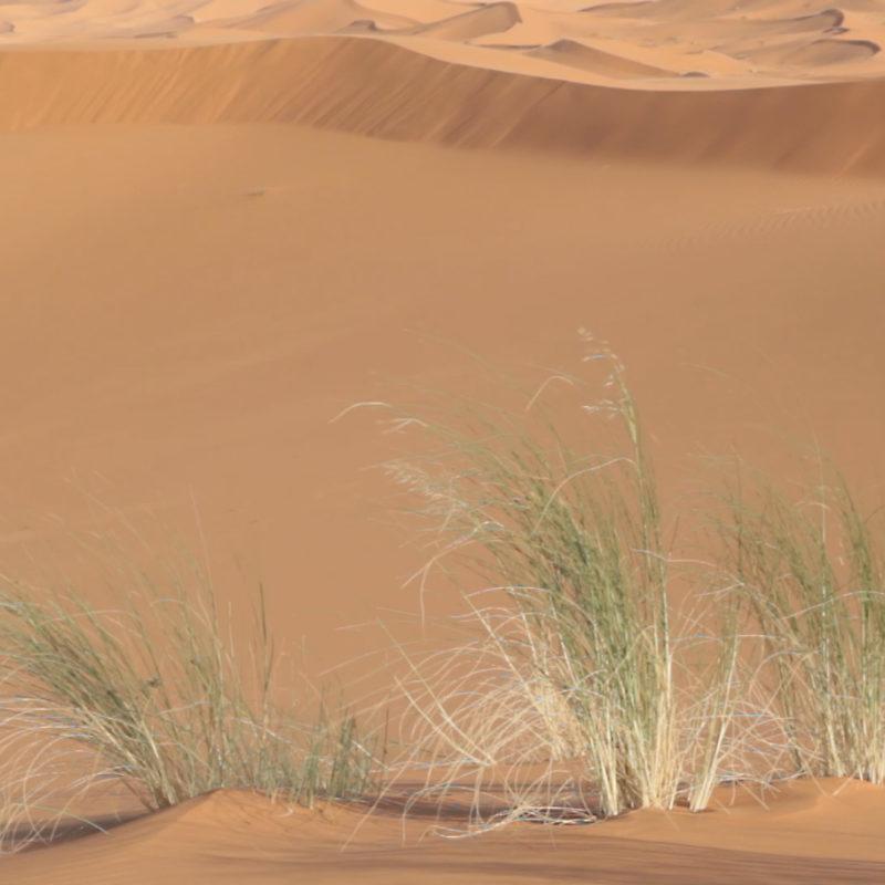 badain jaran chine dune desert maroc olivier coste sisyphe explorer solar explorer mongolie trekking survie (41)